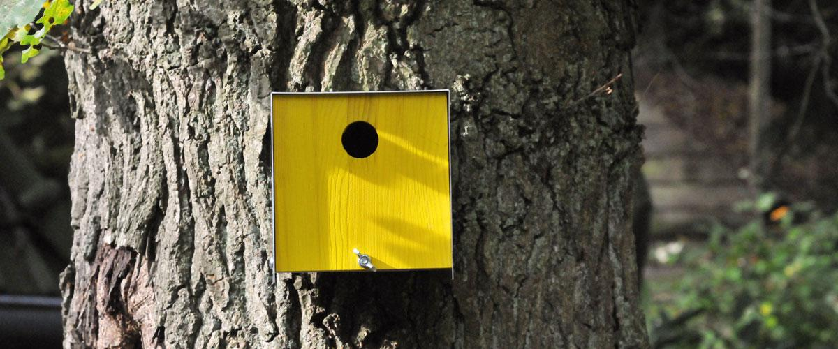 Vogelhuis box geel aan boom